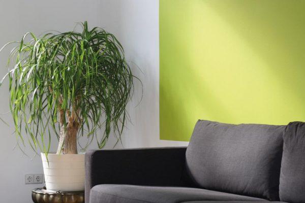komple-boya-dekorasyon-tadilat-tavan-salon-mutfak-çocuk-odası-çift-renk-boya